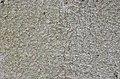 American Beech Fagus grandifolia Closeup Bark.JPG
