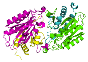 Aminoacylase - The quaternary structure of an Aminoacylase 1 (PDB 1Q7L)