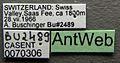 Anergates atratulus casent0070306 label 1.jpg