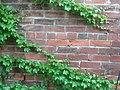 Anheuser Busch Beer Depot Ivy Pattern 1.jpg