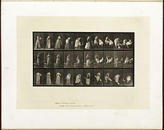 Animal locomotion. Plate 497 (Boston Public Library).jpg