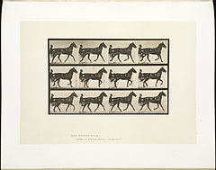 Animal locomotion. Plate 605 (Boston Public Library).jpg