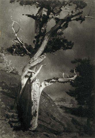 Anne Brigman - Image: Anne brigman dying cedar