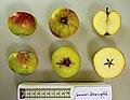 Apfel mit Schnitt Sommer-Rosenapfel (fcm).jpg