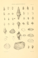 Appendix to Marine shells of South Africa Plate VI.png