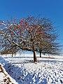 Apple tree in Winter.jpg