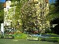 April - Spring Botanischer Garten Freiburg - 2016 - panoramio (11).jpg