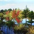 Arboretum Ellerhoop - Wasserwald.jpg