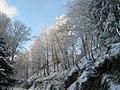Arbres gelés sous le soleil - panoramio.jpg