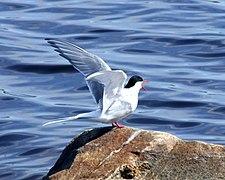 Kuvahaun tulos haulle creative commons Itämeri