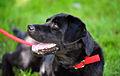 Arson Dog Daisy (7832705284).jpg