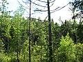 Asinovsky District, Tomsk Oblast, Russia - panoramio (112).jpg