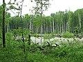 Asinovsky District, Tomsk Oblast, Russia - panoramio (42).jpg