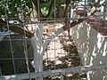 Asos 280 84, Greece - panoramio (2).jpg
