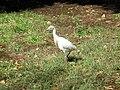 Aswan Botanical Garden 03.jpg