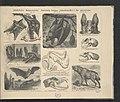 Atlas historji naturalnej 1900 (118207889).jpg