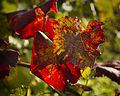 Autumn's advance (15593546199).jpg