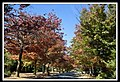 Autumn Leaves begin to fall-028 (5662832888).jpg