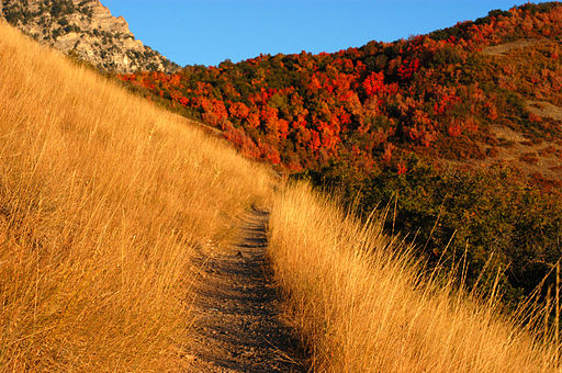 Autumn mountain trail