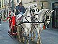 Babbo Natale e i cavalli.jpg