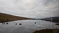Bahnfahrt West Highland Line von Fort William nach Bridge of Orchy (37899833004).jpg