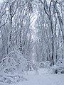 Baneasa winter (2418129809).jpg