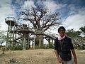 Baobabs in Tanzania 0401 Nevit.jpg