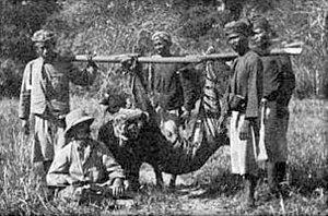 Bali tiger - The hunting party of Baron Oscar Vojnich with a Balinese tiger, shot at Gunung Gondol, NW Bali, Nov. 1911