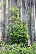 Basaltsäulen (Orgelpfeifen)...IMG 9847WI.jpg