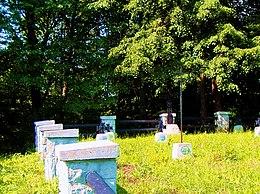 Cmentarz wojenny nr 64 w Bednarce