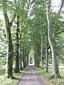 Beech Avenue - geograph.org.uk - 546197.jpg