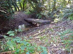 Beeston Beck (Norfolk) - Beeston Beck in Sheringham Woods close to its source