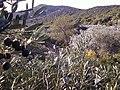 Bencic Olives - panoramio.jpg