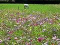 Benquet jachère fleurie 2.JPG