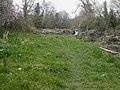 Berriew, molehills - geograph.org.uk - 1243816.jpg