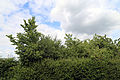 Betts Lane gate, hedge trees and sky at Nazeing, Essex, England.JPG
