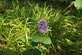 Biotopo inghiaie fiore4.jpg