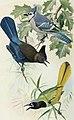 Bird-lore (1919) (14775243103).jpg