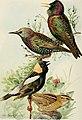 Bird-lore (1920) (14727756126).jpg