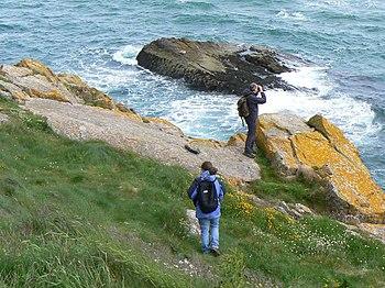 English: Bird watching On the rocks below Slai...