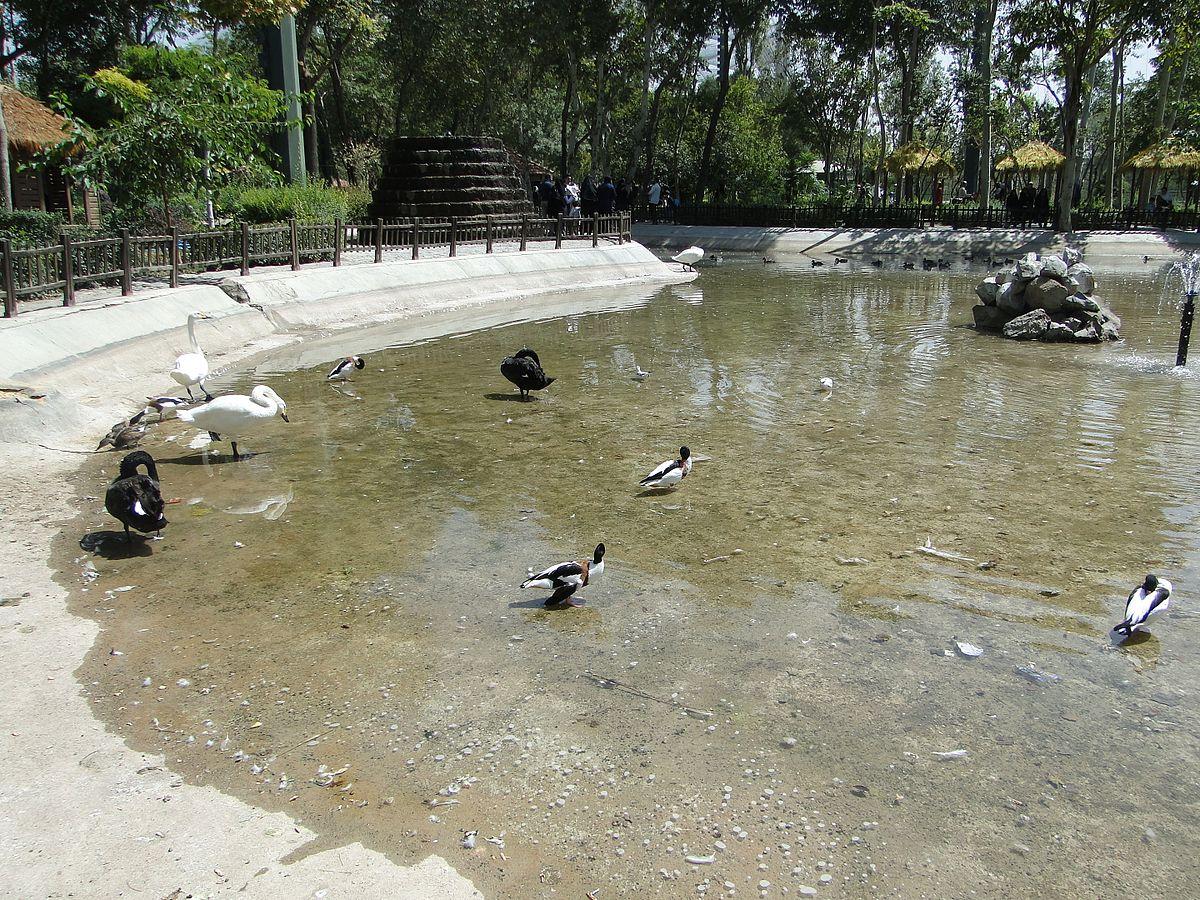 Vogelgarten