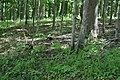 Black squirrel distant 2 (c56fa4e1-9b20-4979-99f7-430536efcd50).JPG