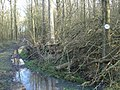 Blackmore Wood - geograph.org.uk - 648274.jpg