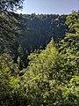 Blackwater Falls State Park WV 31.jpg
