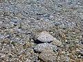 Bliss Beach, Lake Tahoe, Clear Water 8-2010 (5758622831).jpg