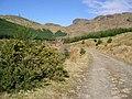Blooming gorse in Kirkton Glen - geograph.org.uk - 389412.jpg