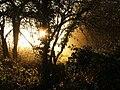 Bluebell woods - geograph.org.uk - 720801.jpg
