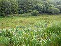 Boggy land near Bofara - geograph.org.uk - 1402091.jpg