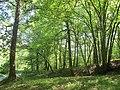 Bois, route de l'Aérodrome, Port-Sainte-Foy-et-Ponchapt, Fougueyrolles 4.jpg