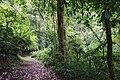 Bosque Eterno De Los Ninos 02.jpg